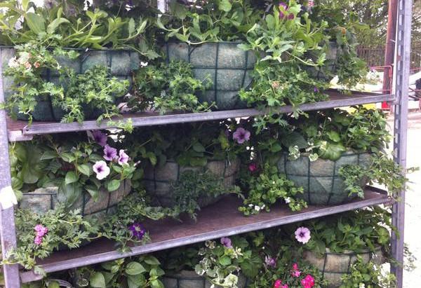 Hanging baskets...