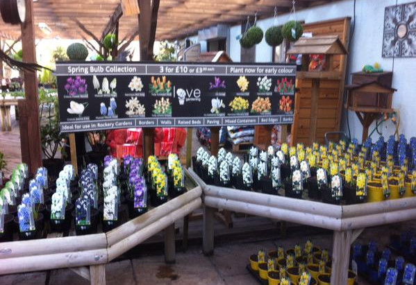 Potted Spring flowering bulbs now in stock at both branches. £3.99 each or 3 for £10.00!!