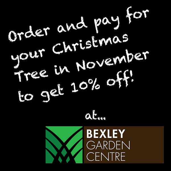 christmas tree offer bexley