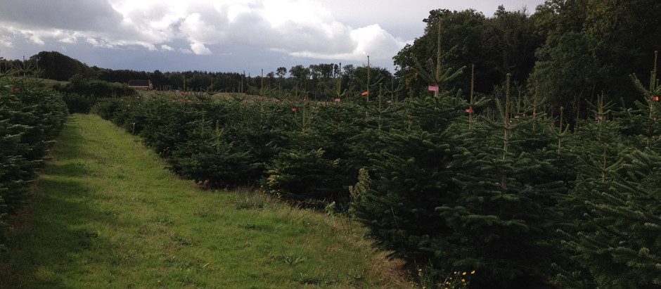 Our christmas tree's are on their way!