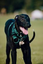 Onyx's first walk