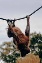 Dublin Zoo, 2018