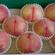 川中島白桃の販売が始まります