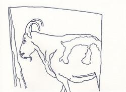 ram, killer of sheep
