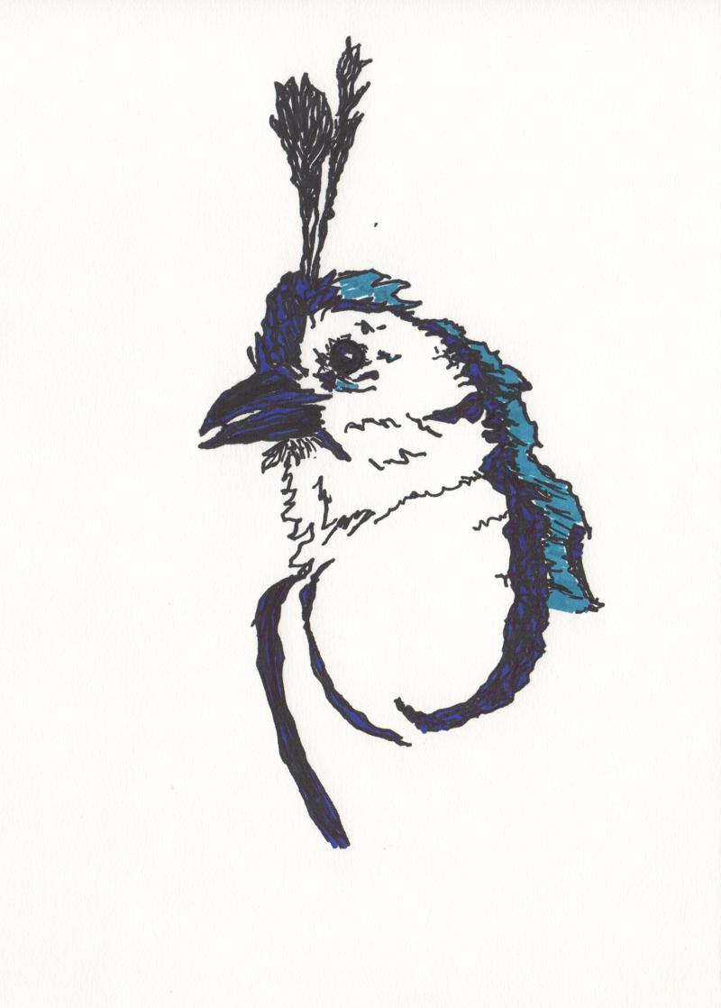 sayulita bird