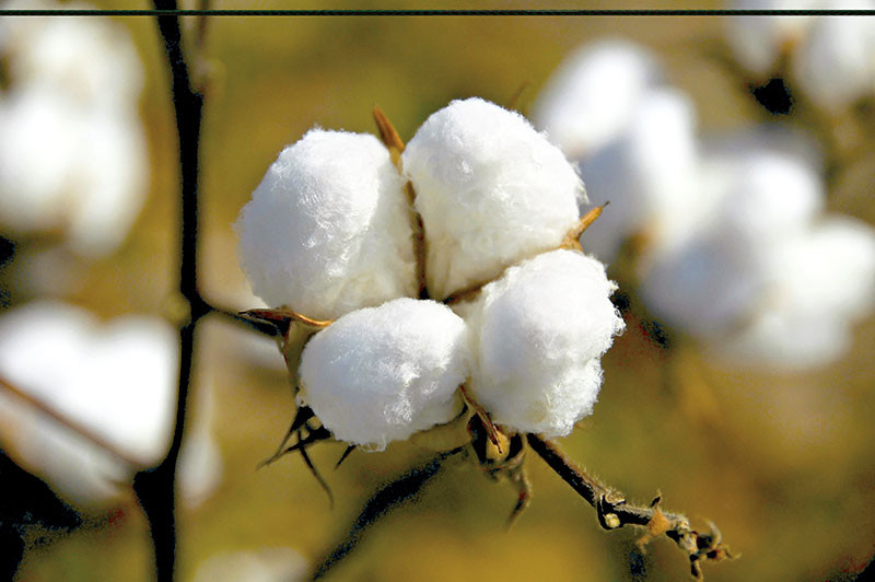 How to source cotton garments from India