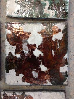 copper beech detail