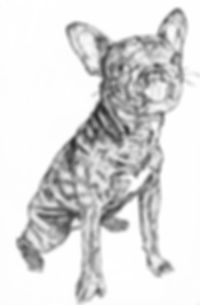 french bulldog copy.jpg