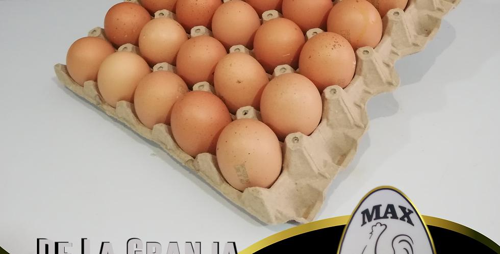 Cubeta De Huevos Tipo EX