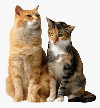 paired kitties.png
