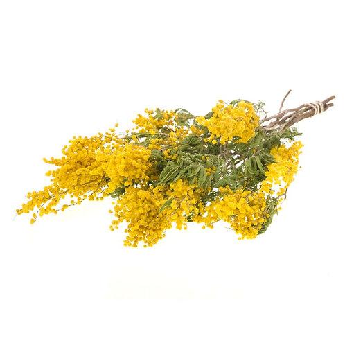 Mimosa Flower - 1 oz