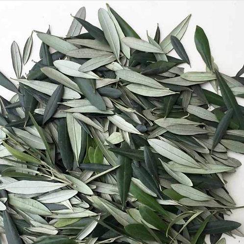 Olive Leaf - 1 oz