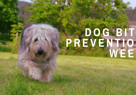 Educate Yourself on Ways to Prevent Dog Bites - Dog Bite Prevention Week 2019