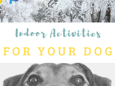 Indoor Fun and Games To Keep Your Dog Busy on Cold Winter Days