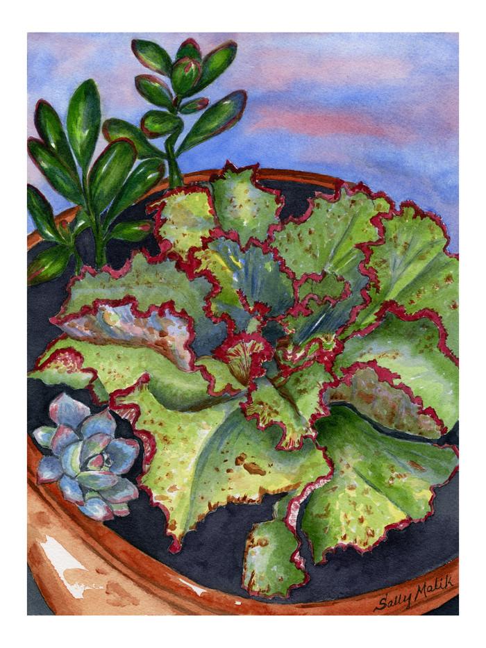 Succulent Garden_1