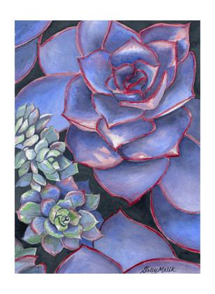 Blue Succulents_1