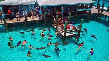 Compass Cay Nurse Sharks.jpg
