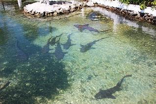 Union Island Sharks Anchorage Hotel Gren