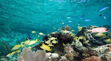 Exuma Cays Land and Sea Park.jpg