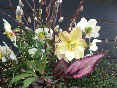 Our top 5 favorite seasonal container plants