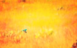 birds-march-grandly_edited_edited