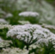 hein-loodus-raudrohi-ravimtaim-oitseb-65