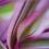 Thumbnail: POSTCARD/ART CARD ref:5176
