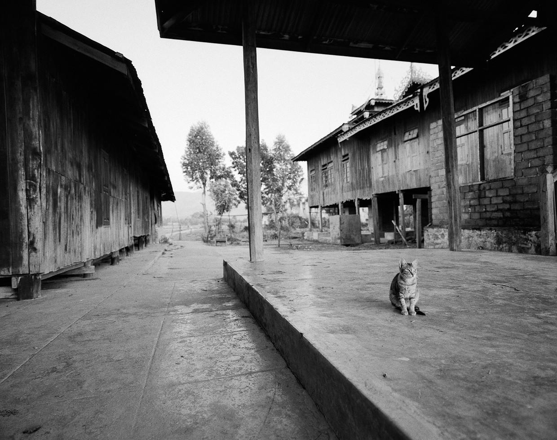 Monastery Cat, Myanmar