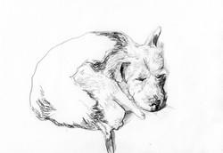drawings (46)