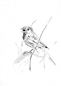 drawings (105)