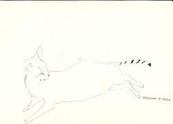 drawings (229)