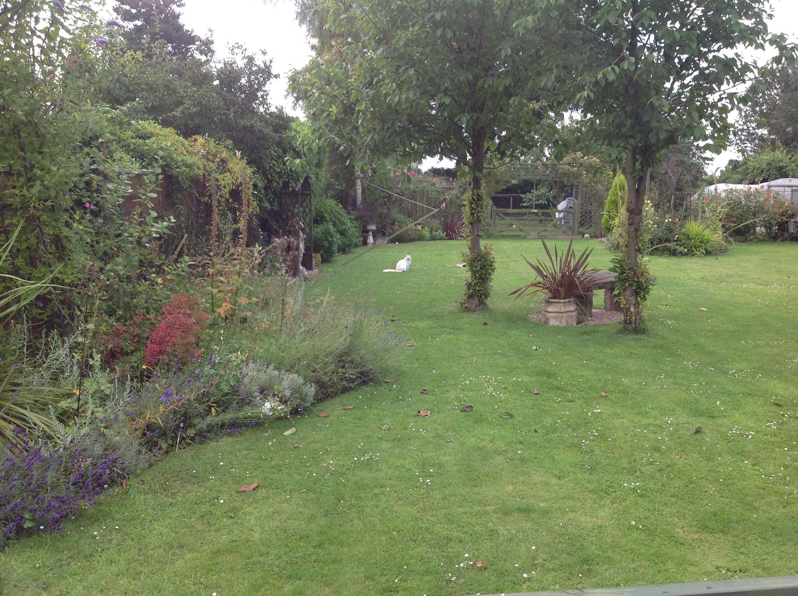 Garden before work started