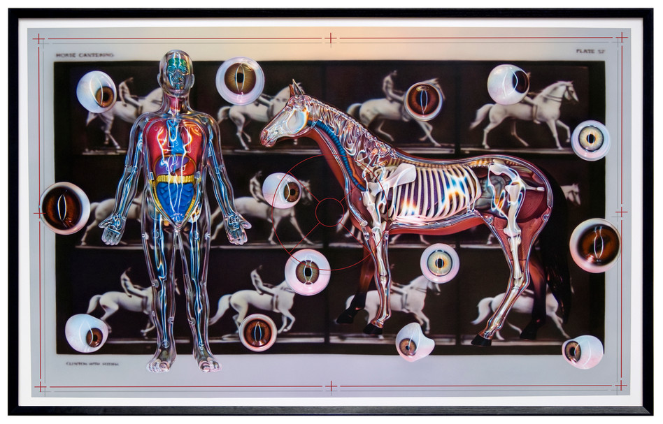 Visible Anatomy – Clinton With Rider, 2010