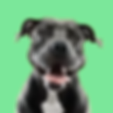 smile dog yellow bg.png