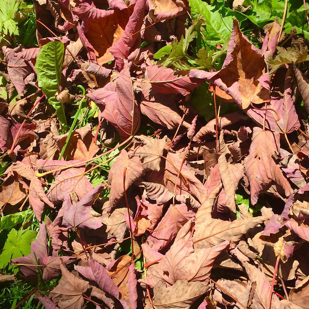 L'automne, une belle saison pour philosopher