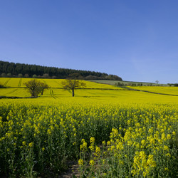 All you need is yellow, Clun, UK