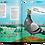 Thumbnail: Пернохвост Крап Ли / Архитектура глазами голубя