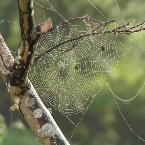 spider-web-617769.jpg