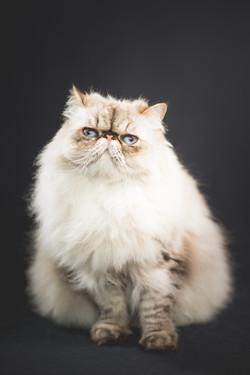 Helena   home pet portraits