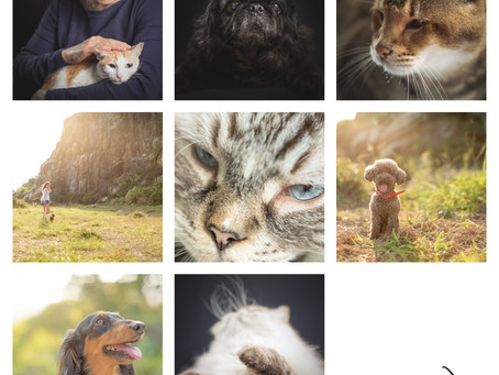 憑任何4月份阿布泰消費單據book寵物攝影即減$500