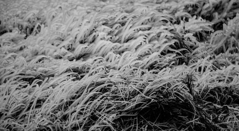 iceland23 - Copy.jpg