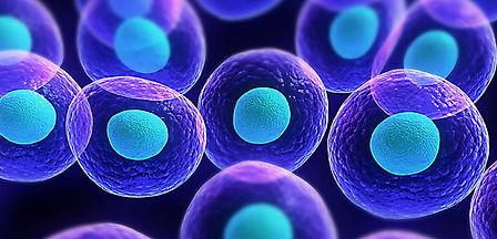 cells (1).jpg