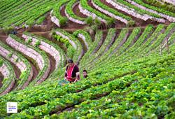 Fields, Farmlands, Plantations
