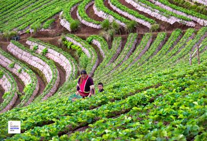 thai film locations farms fields j.jpg