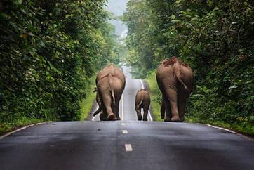 Elephants-Khao-Yai-Nakhon-Ratchasima.jpg