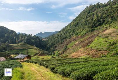 thai film locations farms fields l.jpg