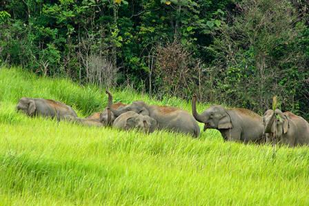 khao-yai-national-park.jpg