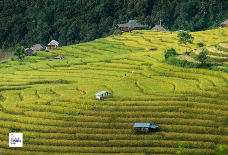 thai film locations farms fields g.jpg