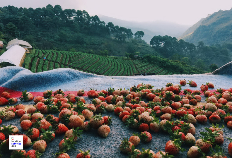 thai film locations farms fields p.jpg