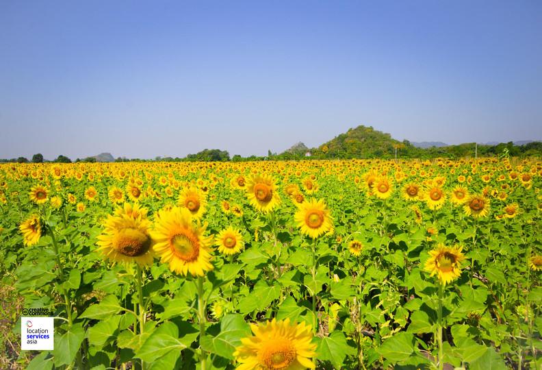 thai film locations farms fields b.jpg
